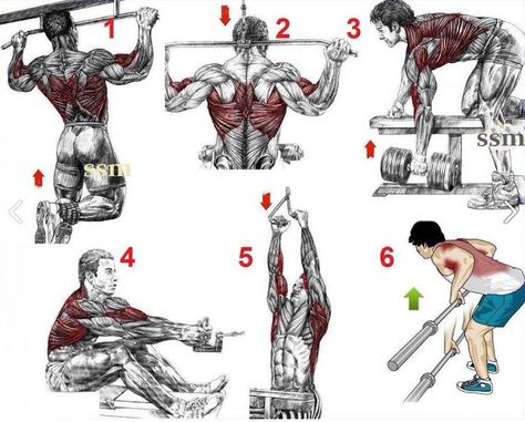 Image result for back and bicep workout